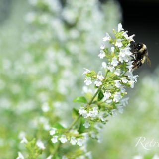 蜂と白花3_ロゴあり